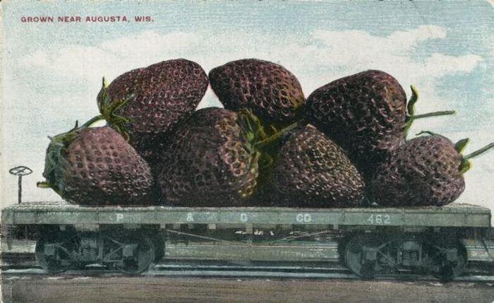 carte postale aliment usa geant16 Cartes postales daliments géants
