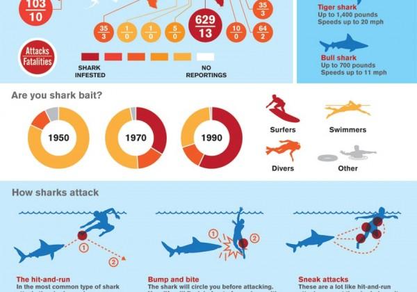 statistiques-requin-attaque.jpg