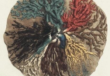 anatomie-sein-1840-cooper-01