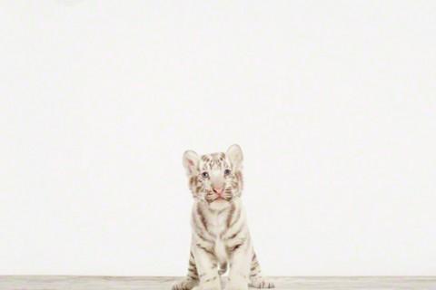 bebe-enfant-animal-mignon-poshoo-01.jpg