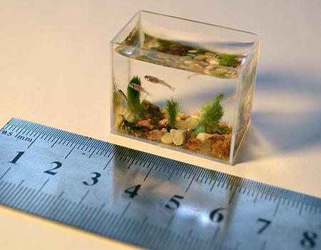 Le plus petit aquarium du monde for Petit aquarium