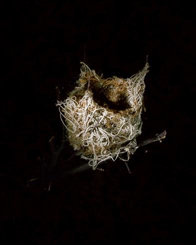 nid-oiseau-richard-barnes-01.jpg
