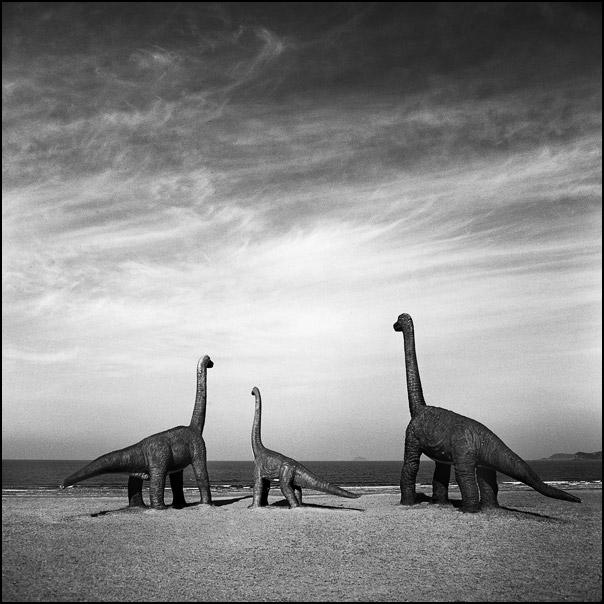 5 dinosaure ok Nous navons pas de dinosaure