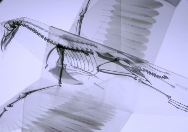 origami-transparent-squelette-01.jpg
