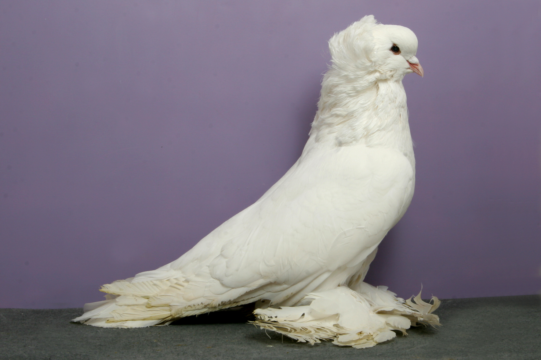 Bird Pigeon 300 Spikes en acier inoxydable insectifuge antiparasitaire chats 5X50cm dissuasion Kit