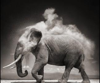 animal-afrique-savanne-nick-brandt-01