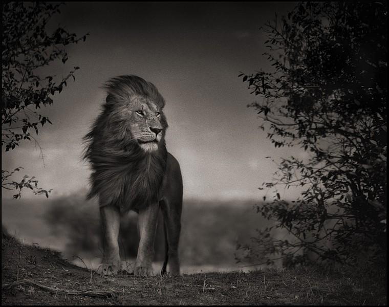 Assez Les animaux africains de Nick Brandt HJ92