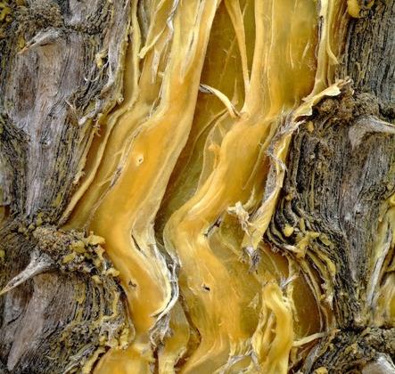 ecorce-arbre-01
