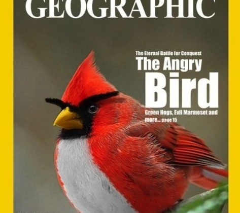 national-geographic-angry-birds.jpg
