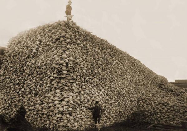 pile-tas-crane-bison-1870