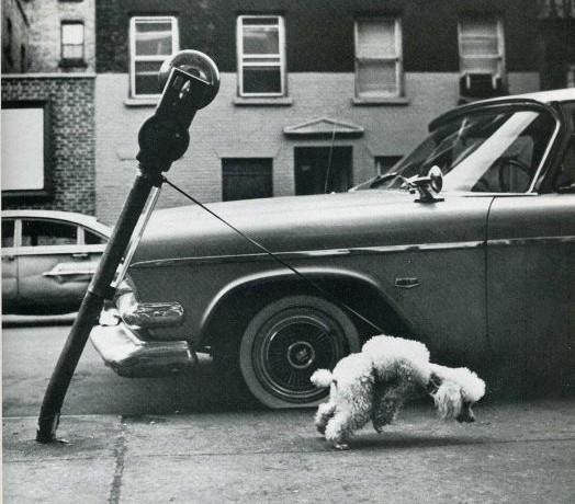 humour-drole-photo-life-magazine-01