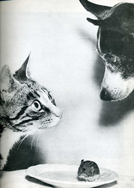 humour-drole-photo-life-magazine-64