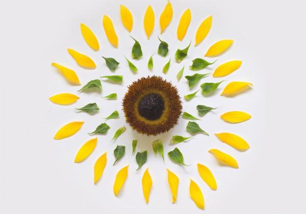 fleur-dessaemble-01