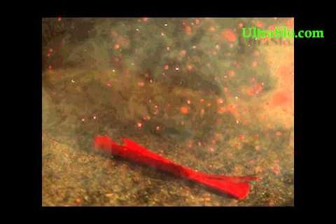Explosion d'un pétard à 10 000img/s
