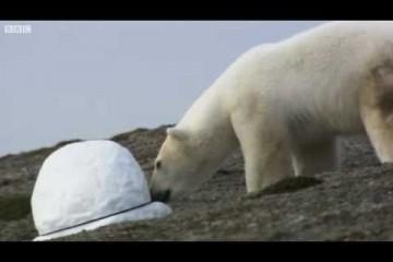 Des ours polaires et des caméras