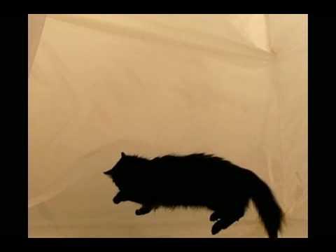 Un chat en apesanteur