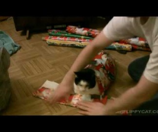 Offrir un chat emballé à Noel