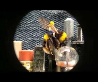 Dot., la plus petite animation stopmotion du monde
