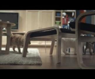 100 chats dans un magasin IKEA