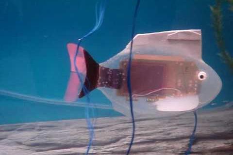 Un robot poisson