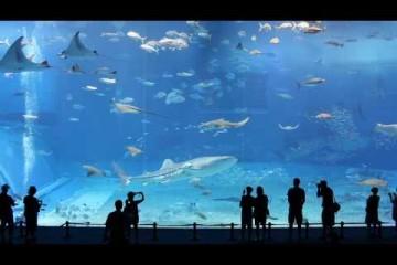 Vidéo haute définition du 2eme plus grand aquarium au monde