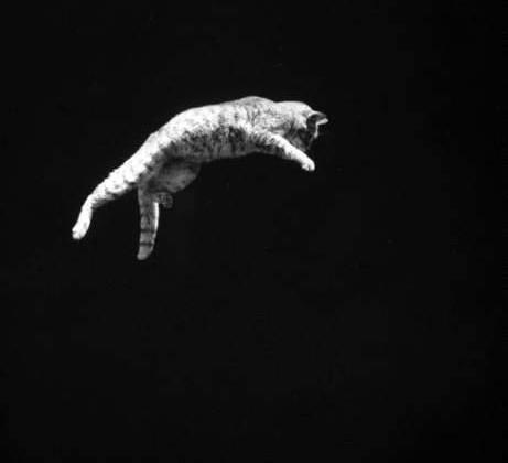 chat-chute-astronaute-trampoline-04