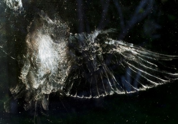 trace-oiseau-vitre-poudre-01