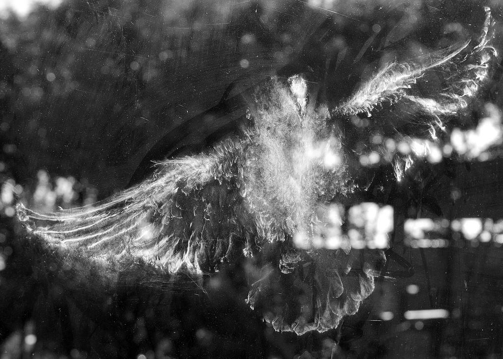 Humeur du jour... en image - Page 20 Trace-oiseau-vitre-poudre-02