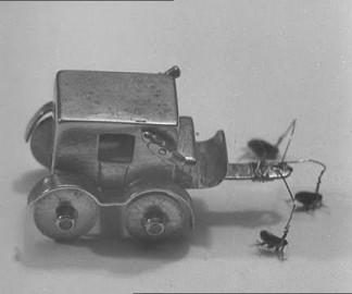 Cirque de puces – 1949