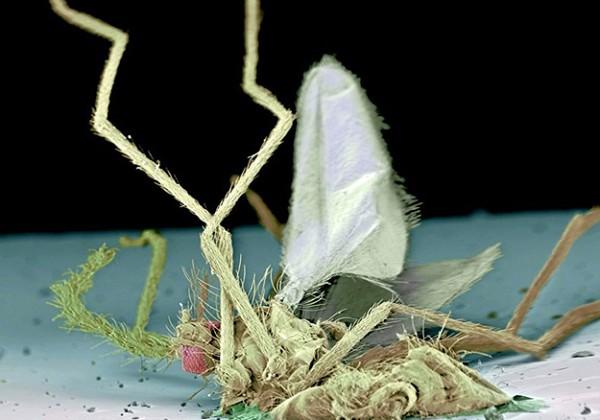 insecte-parebrise-ecrase-microscope-electronique-01
