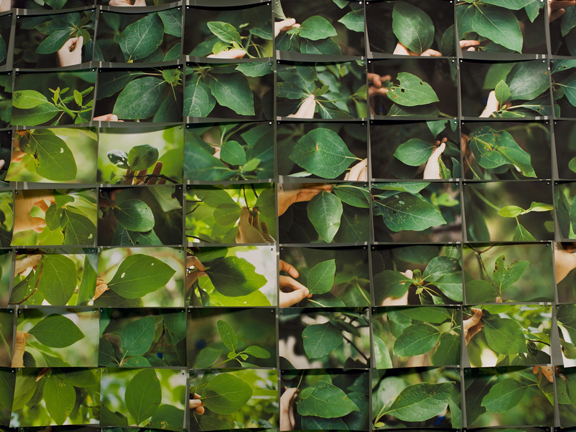 12x12 Mays06 Photographie et science par Aspen Mays