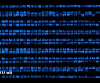 Des pixels en bactéries