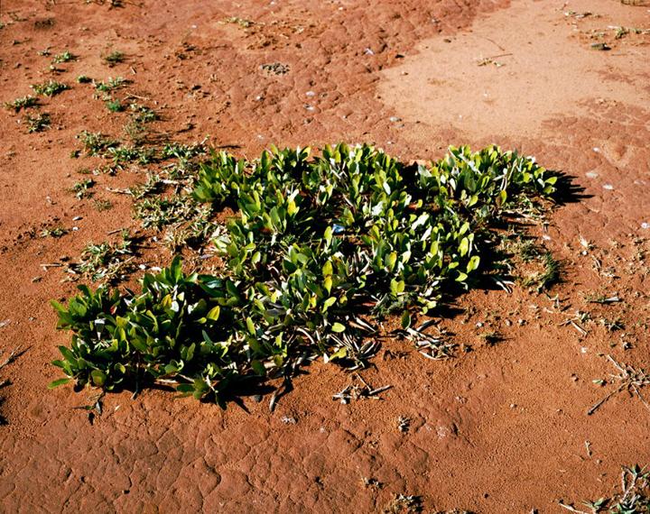 organisme vivant plus vieux planete 03 Les organismes vivants les plus vieux du monde