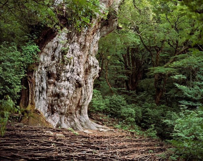organisme vivant plus vieux planete 04 Les organismes vivants les plus vieux du monde