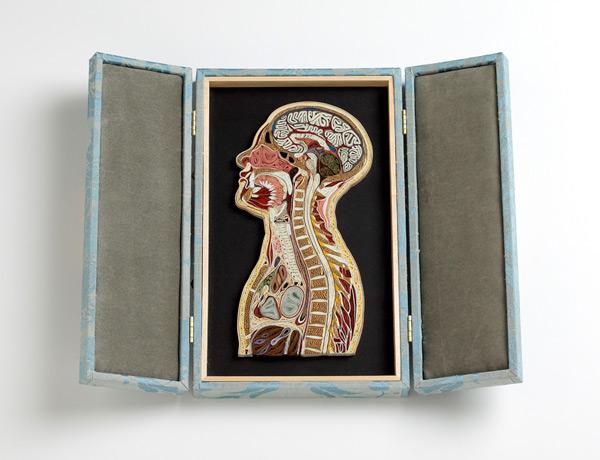 coupe anatomie papier 01 Coupes anatomiques en tranches de papier  technologie bonus art