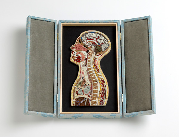 coupe-anatomie-papier-01