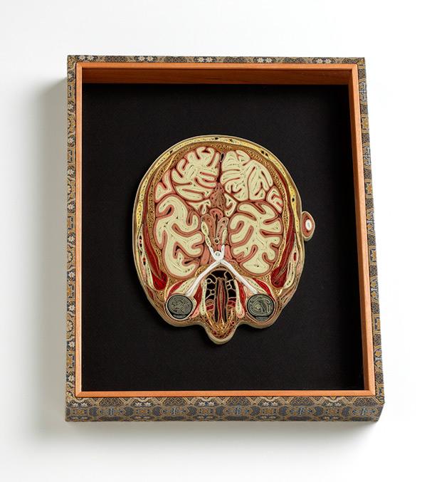 coupe anatomie papier 03 Coupes anatomiques en tranches de papier  technologie bonus art