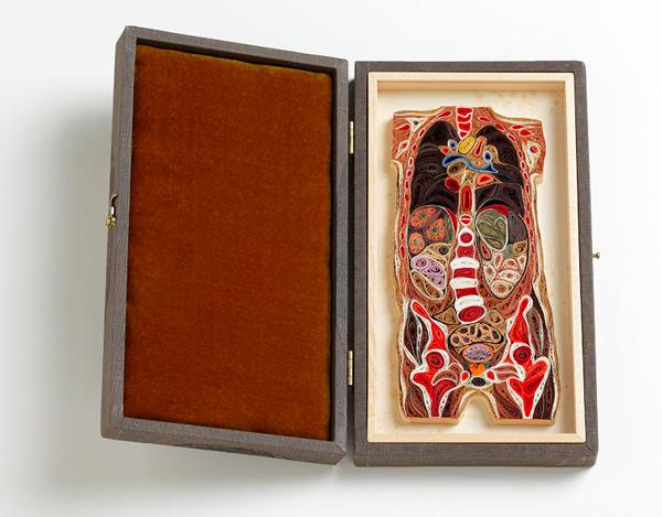 coupe anatomie papier 05 Coupes anatomiques en tranches de papier  technologie bonus art