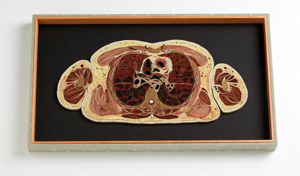 coupe anatomie papier 06 Coupes anatomiques en tranches de papier  technologie bonus art
