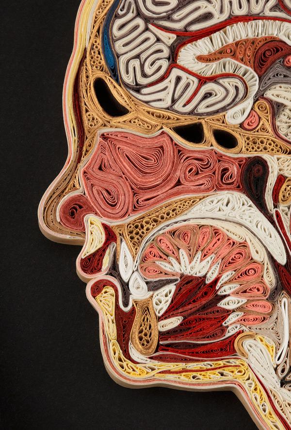 coupe anatomie papier 07 Coupes anatomiques en tranches de papier  technologie bonus art