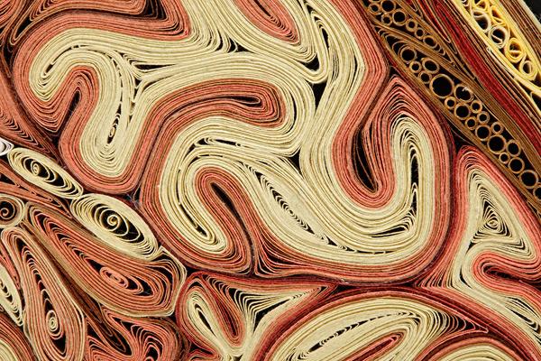 coupe anatomie papier 10 Coupes anatomiques en tranches de papier  technologie bonus art
