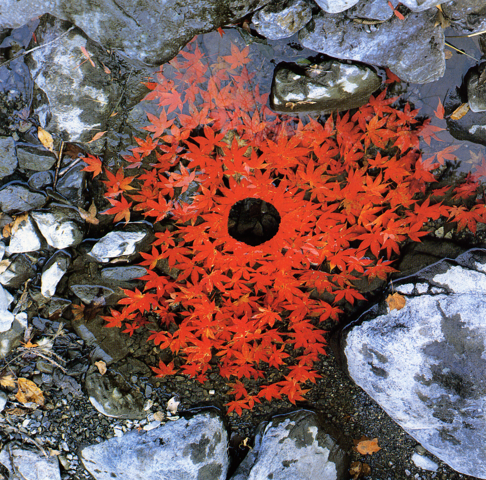 land art Andy Goldsworthy 03 Les oeuvres dans la nature dAndy Goldsworthy  photo bonus art