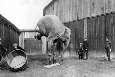 photo-ancienne-elephant-vie-01