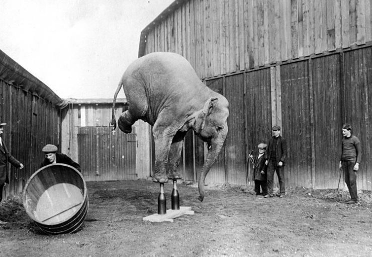 photo-ancienne-elephant-vie-01