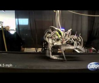 Cheetah, un robot qui court vite