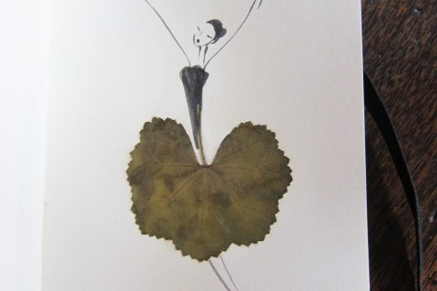 herbier-feuille-illustration-01