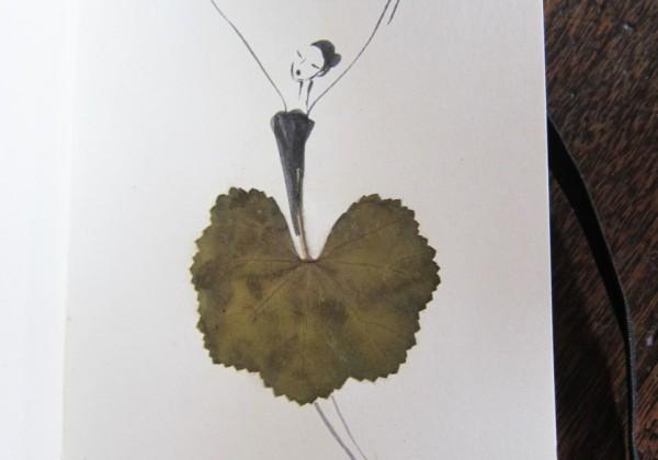 herbier-feuille-illustration-01