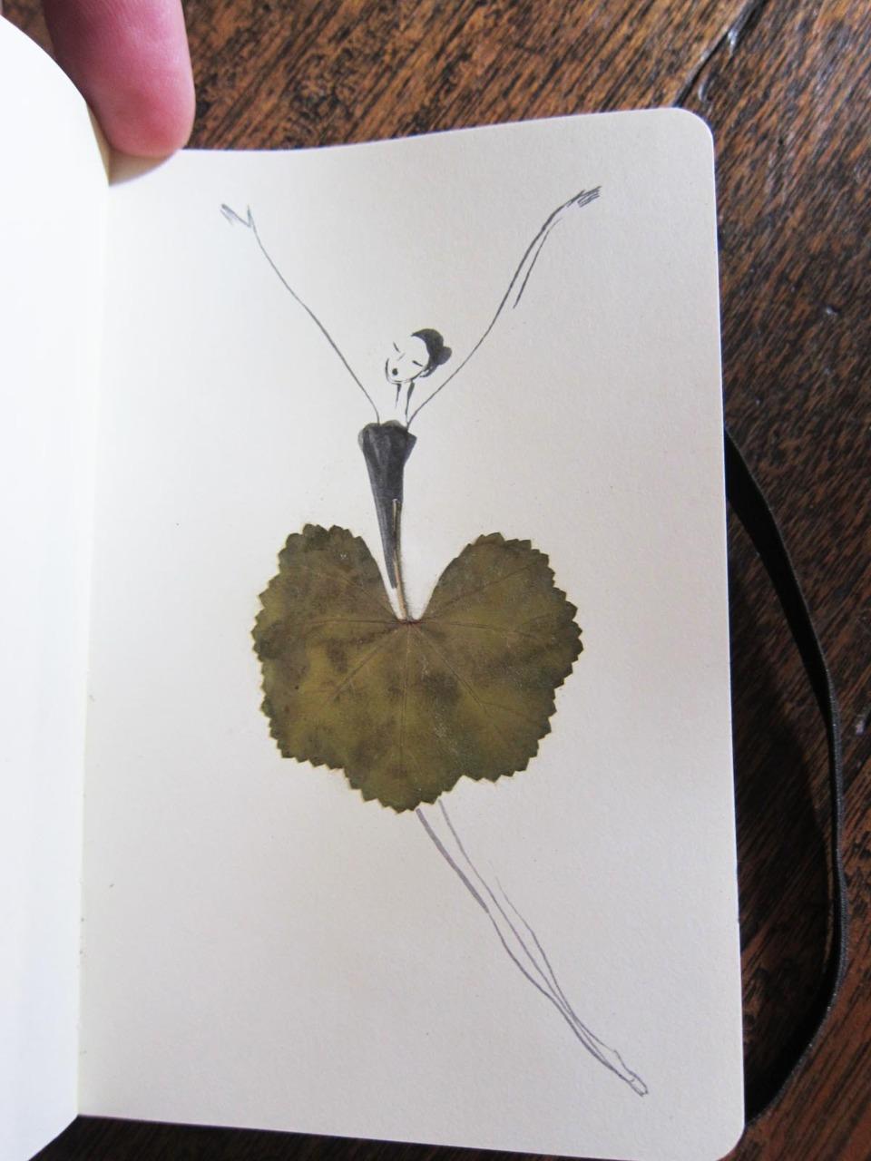herbier feuille illustration 01 Un herbier illustré