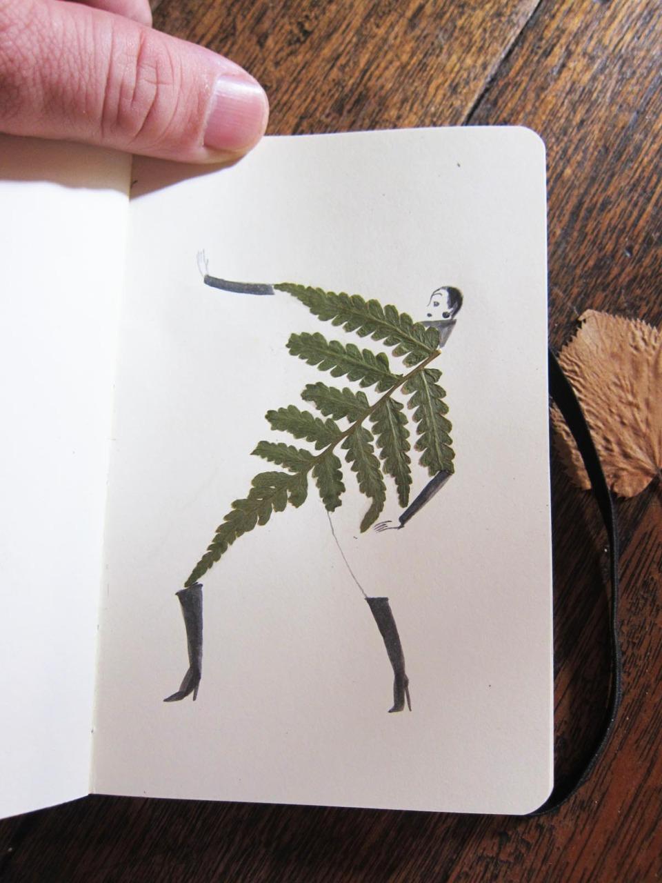 herbier feuille illustration 03 Un herbier illustré
