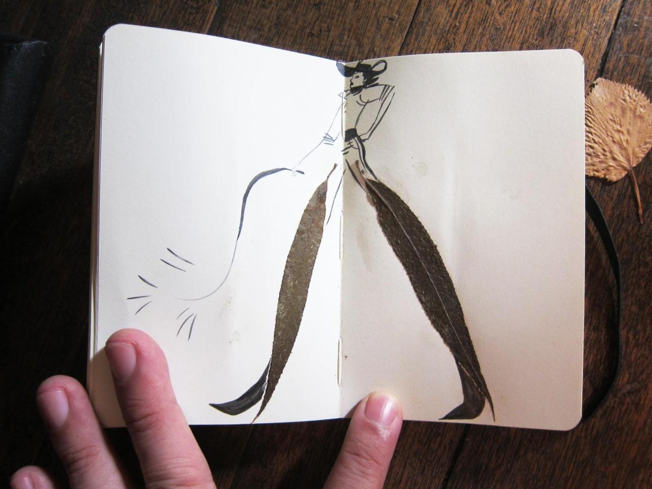 herbier feuille illustration 06 Un herbier illustré